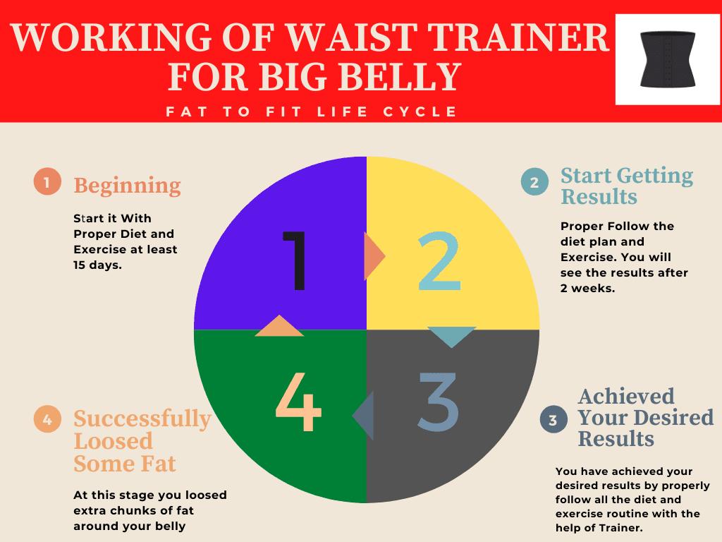 Working of Big Belly Waist Trainer Graph